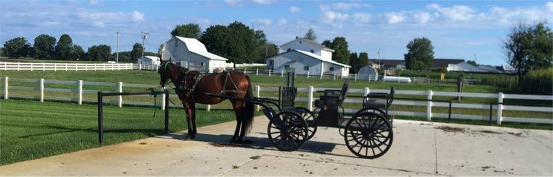 Some Amish people don't like to be photographed, but in this case, the horse didn't mind. In Indiana.